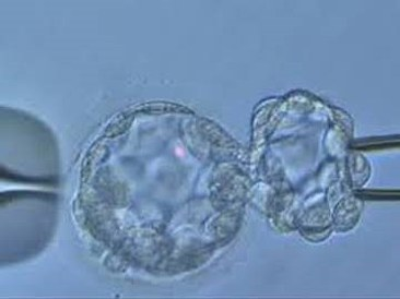 How can genetic testing of IVF embryos help you?